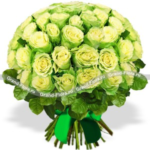 Bouquet of 51 roses green - Comilfo